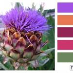 FASE13 Kleurinspiratie voor je interieur! ~ Artichoc hues