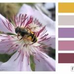 FASE13 Kleurinspiratie voor je interieur! ~ Clematis Pink Hues