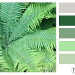 FASE13_kleurinspiratie_fern-green