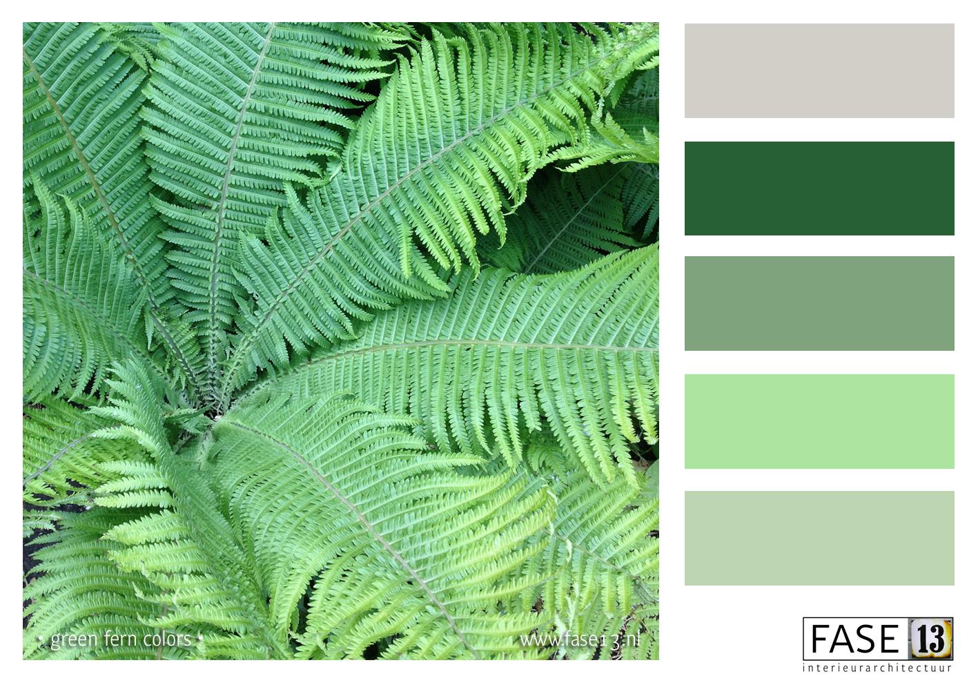 FASE13_fern-green
