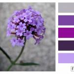 FASE13 | Kleurinspiratie voor je interieur! ~ Ijzerhard