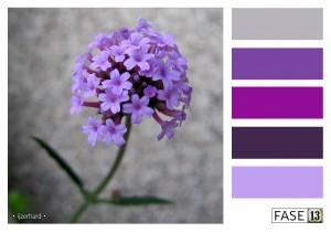 fase13 kleurinspiratie voor je interieur, ijzerhard