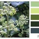 FASE13 Kleurinspiratie voor je interieur! ~ Ivy Green Hues