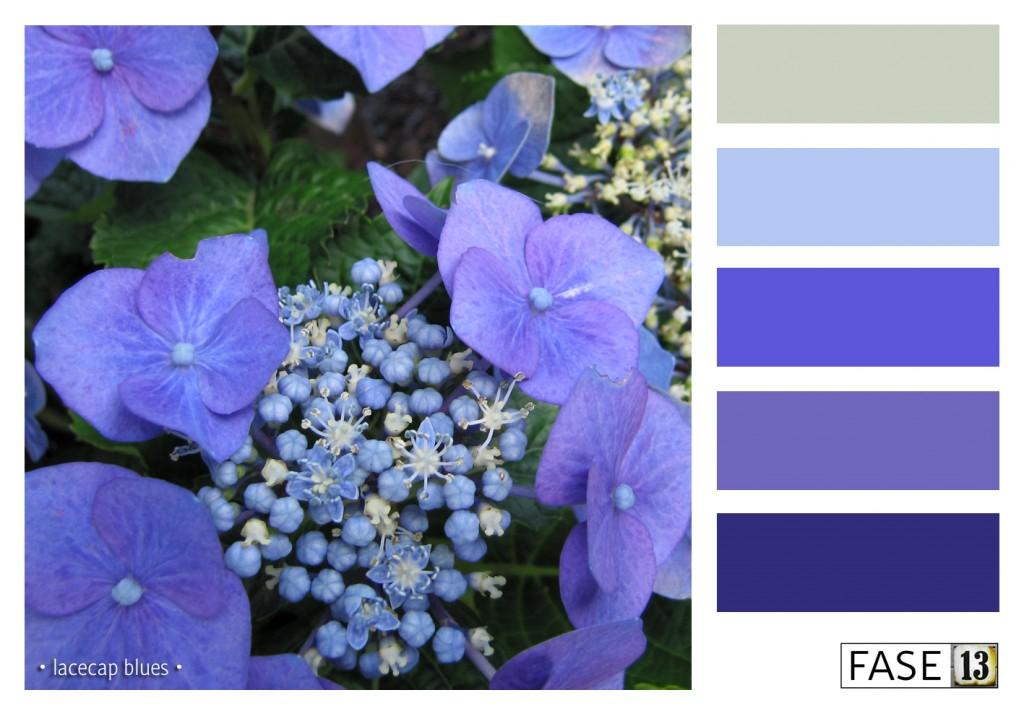fase13 kleurinspiratie voor je interieur, lacecap blues