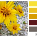 FASE13 Kleurinspiratie voor je interieur! ~ Sunny September Yellows